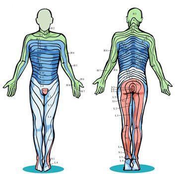 Menschlicher Schmerzen Taubheit Und Kribbeln In Den Beinen